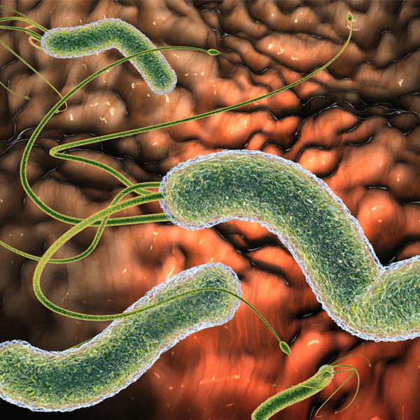 Helicobacter Pylori wrzód trawienny
